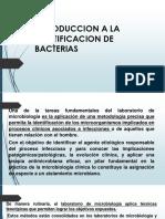 Introduccion a La Identificacion de Bacterias