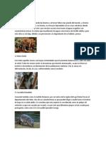 Animales en Extincion de Guatemala y Belice