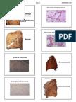 Patologia Respiratoria 2017 Alumno.pdf.PDF