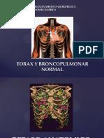 Torax y Broncopulmonar Normal