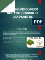 Fotoperiodo en Las Plantas