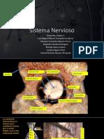Anatomia Equipo 1, Partes Anatomicas