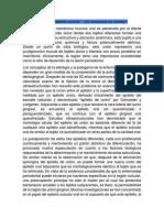 Queratinización Del Epitelio Sulcular