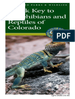 Quick Key to Amphibians and Reptiles of Colorado