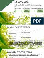 mucosa oral 02.pptx