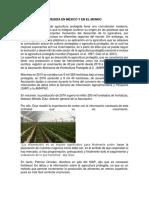Agricultura Protegida en México y en El Mundo