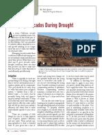 7 Managing Avocados During Drought Summer 2015