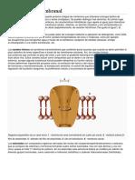 BIOQUIMICA DICCIONARIO.docx