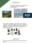 ECOLOGIA Y SUS RAMAS.pptx