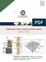 Clase 15 Organizacion Tisular 2018