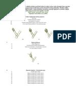 BBCH skala razvojnih faza rasta jabuke.pdf