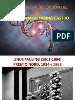 13. Estructura Del ADN y Replicación