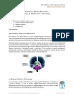Estructura y Funciones Del Cerebro