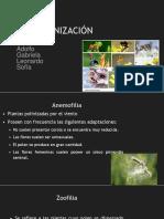 Polinización Eq 5