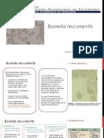 Borrelia Recurrentis