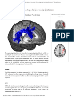 Superior Longitudinal Fasciculus _ Connectopedia Knowledge Database _ Pr Denis Ducreux