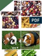 FRUTOS Y ANIMALES DE LA SIERRA.odt