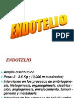 endotelio