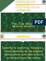 Aparato Reproductor Anatomia Organos Reproductores Animales