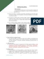 CLASE 8 Fisura Palatina y Estenosis Pilorica