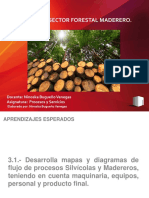 Sector Forestal Maderero