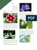Plantas de Clima Húmedo