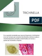 trichinella