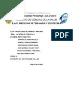 Informe de Vaca Esofagotomia