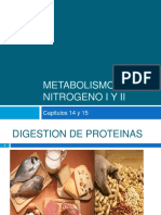 metabolismo del nitrógeno y lípidos
