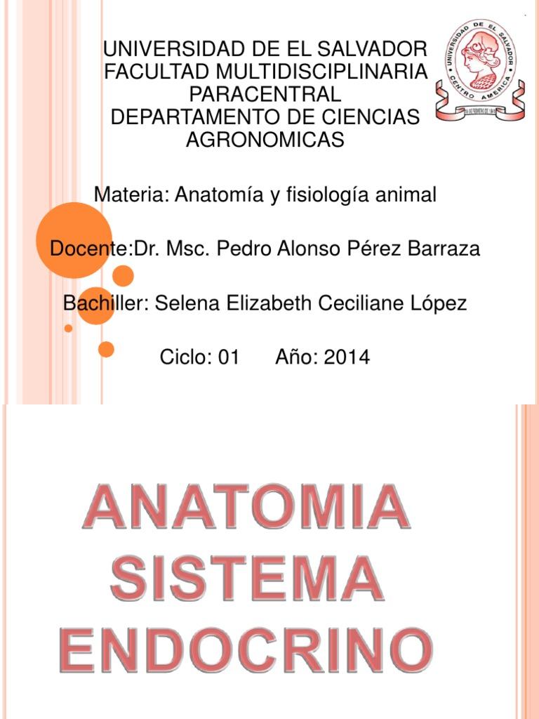 Excelente Endocrina Hoja De Trabajo Del Sistema Pdf Imagen - hojas ...