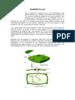 57435049-PLANTAS-DE-C3-y-C4