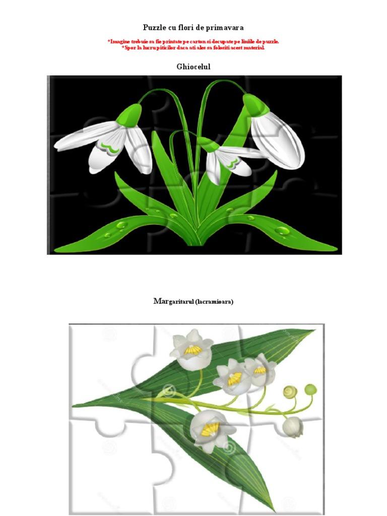 Puzzle Cu Florile De Primavara