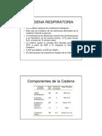 Cadena Respiratoria2