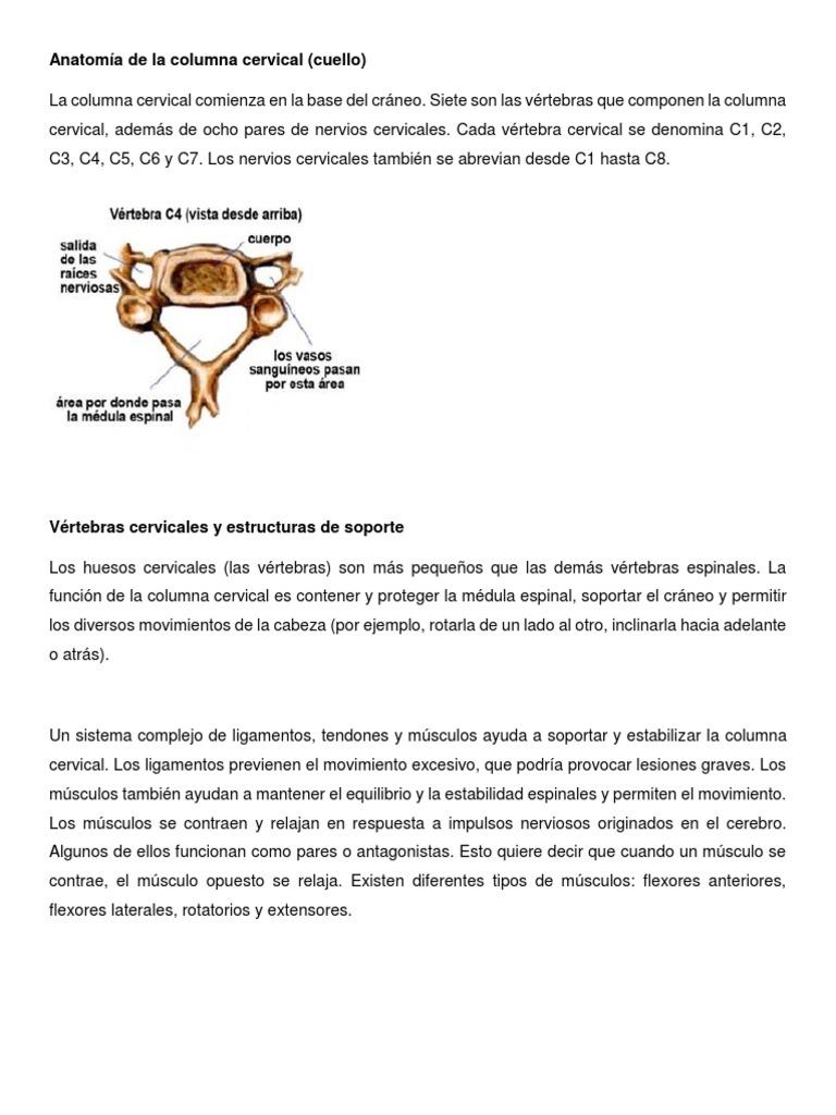 Anatomía de la columna cervical.docx