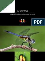 508573 15 DYrPAj3N Insectos