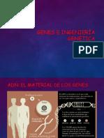 Genes e Ingenierc3ada Genc3a9tica