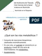 Metabolismo abastecimiento energético