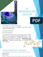 La Reproduccion Celular