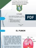 EL PULMON