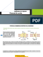 Potencial de membrana en reposo, Potencial de acción.pptx