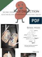 kidney dissection - katelynn nguyen kristina tang tina vu   jenifer pham