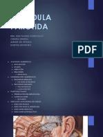 Glándula Parótida Puch