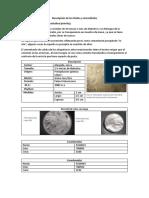 Descripción de Los Fósiles y Microfósiles