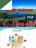 Reino Plantae Metaphyta