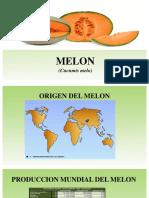 Diapositivas de Melon