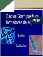 BACTERIOLOGIA Bacillus Clostridium