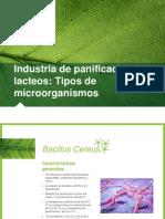 Bacillus Celleus