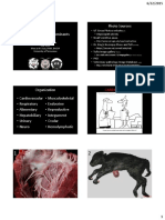 51 Diseases of Ruminants -- Dr. Sula