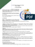 Guía Ciclo Celular, Mitosis y Meiosis (Alumnos)