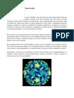 Proces Virus Rujeolic